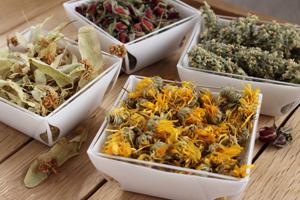 Natura 9 propose une large gamme de plantes sèches.