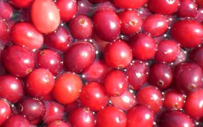La Canneberge ou Cranberry est idéale pour soigner les problèmes urinaires tels que la cystite.