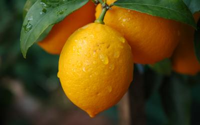 Le citron favorise la digestion et vous aide à avoir une peau saine et lumineuse.