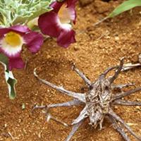 L'Harpagophytum est un complément alimentaire idéal pour les articulations douloureuses.